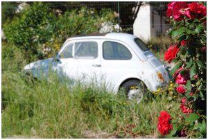 Fiat 500 mit Rosen