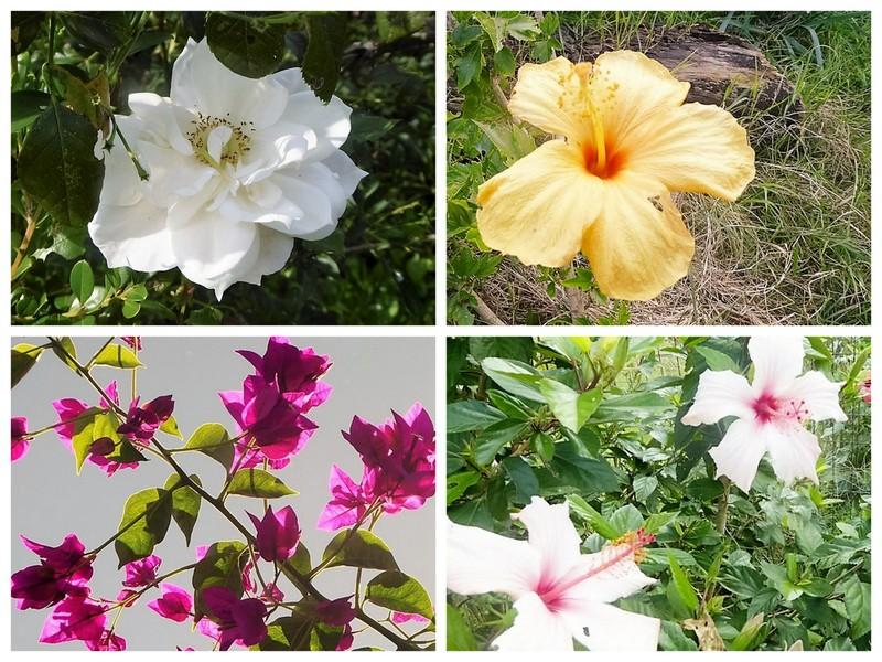 Herbst in Apulien Blüten