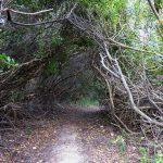 Wege durch das Unterholz